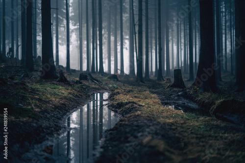 Wald mit Nebel und Spiegelung in Pfütze im Vordergrund