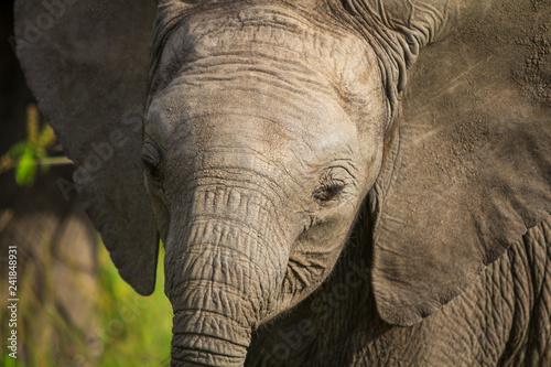 Foto auf Leinwand Baby Elephant in the Masai Mara