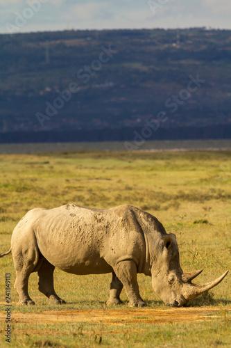 Fényképezés  White Rhino in Lake Nakuru National Park