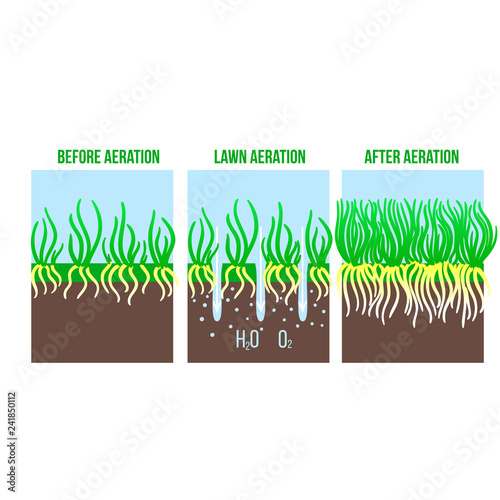 Fotografie, Tablou Lawn aeration stage illustration