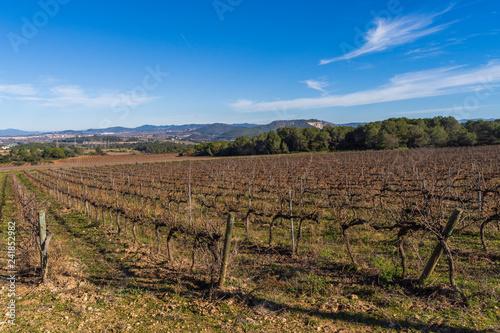 Fotografía  Landscape with vineyards in Penedes wine region,Catalonia