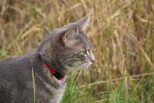 Katze Auf Mausjagd An Einem Getreidefeld 2019104