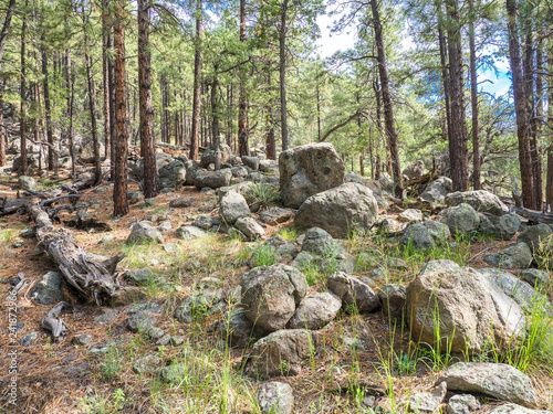 Trees and mossy boulders at 9500 ft, Flagstaff Arizona Canvas Print