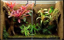Tropical Terrarium Or Pet Tank...