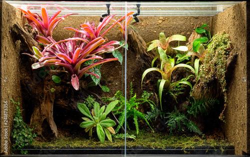 Photographie  tropical terrarium or pet tank for frogs, lizards or geckos