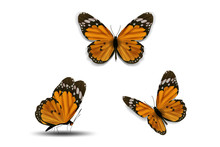 Various Butterfly On White Bac...