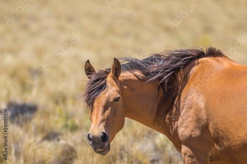 Fotografie, Obraz  Retrato de un caballo parado de costado y con la cabeza girada mirando hacia la