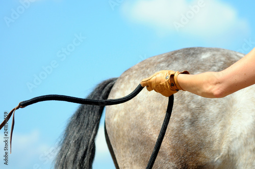 Cuadros en Lienzo horsemanship training