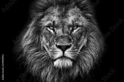 Photo sur Aluminium Lion King face BW