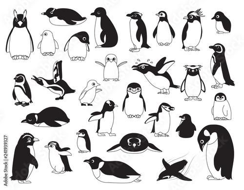 Fototapeta premium Ładny ptak różnych pingwinów czarno-biały zestaw ilustracji