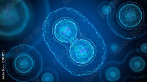 Obraz na plátně Mitosis - cell division of bacteria. 3D rendered illustration.