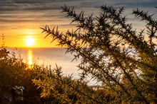 Sunset Over The Sea With A Thorny Bush In The Foreground Somewhere On The North Coast Of Brittany