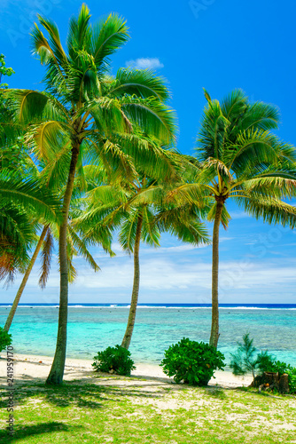 Fotografie, Obraz  An idyllic beach with palm trees in Rarotonga in the Cook Islands