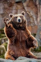 Big Bear Greeting