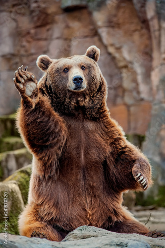 Canvas Print Big bear greeting