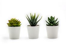 Natural Green Succulents Cactu...