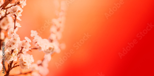 Spring blossom border over red background with copyspace. Chinese new year nature design.