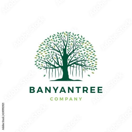 banyan tree logo vector icon illustration Wallpaper Mural