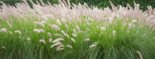 Green Grasses With Beautiful S...