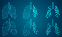Vector Set 3D Lungs And Bronch...