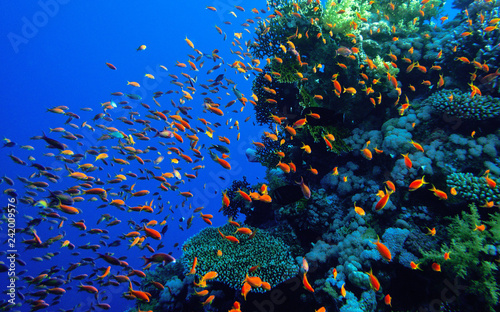Photo Stands Coral reefs Coral reef Red Sea.