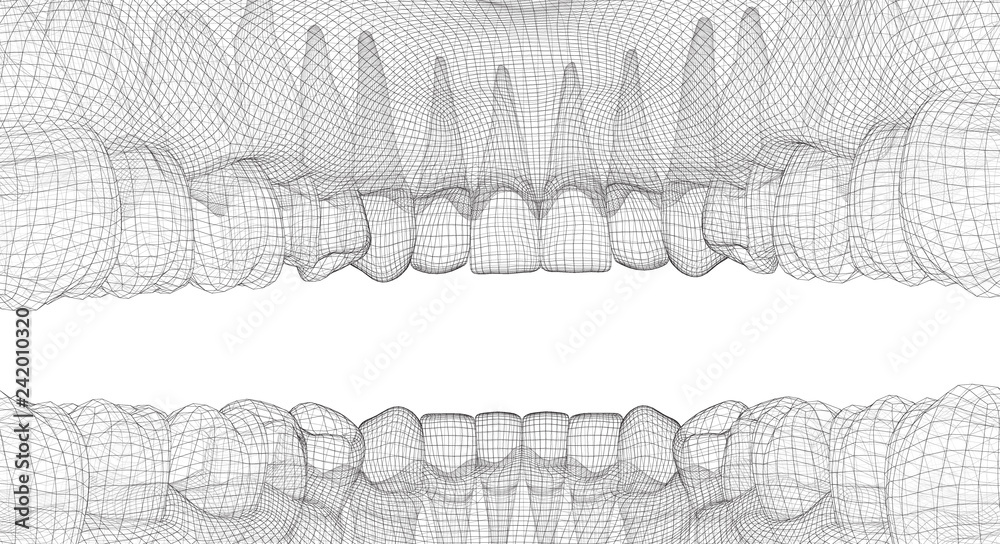 Fototapety, obrazy: human jaw. 3d vector layout. medicine and health