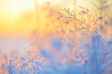 Frost And Ice Crystals On Gras...