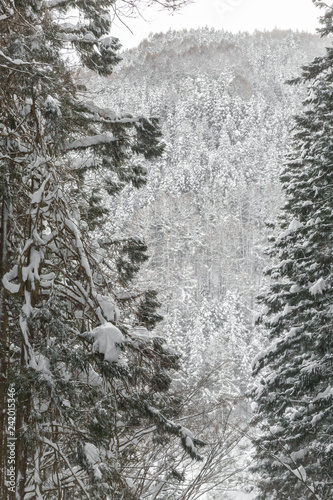 Aluminium Prints Dark grey winter Landscape of Pine Forest