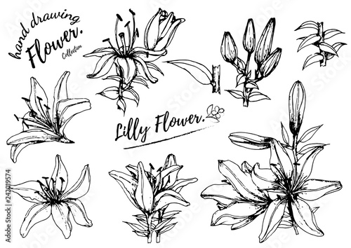 Lilly flower drawing illustration Fototapete