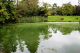 Teich mit Algenblüte im Sommer