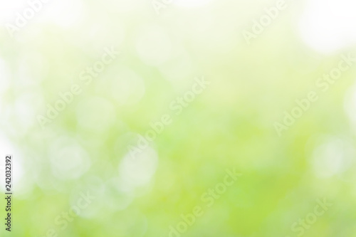 Fotografie, Obraz  Natural blurred summer background of green foliage illuminated by sunlight (abst