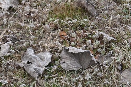 Fotografie, Obraz  prato ghiacciato invernale