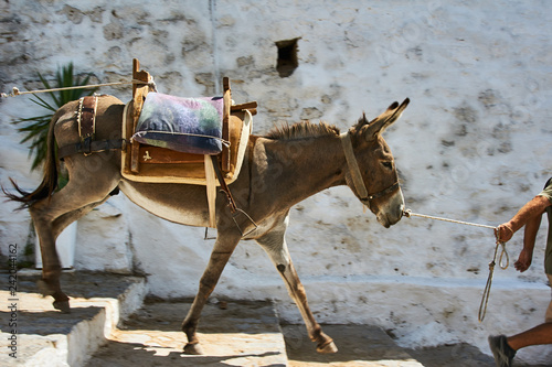 donkey on the streets of the town of Lindos on Rhodes Island .