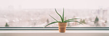 Plant At Home Window In Winter...