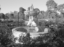 Ancient Stone Fountain, Sprouting Water From It, Surrounded By Greenery, Outdoors. Black And White Photo, Taken With Daylight.