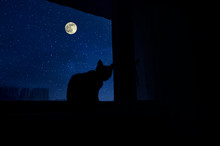 Dark Room In The Silhouette Of A Cat Sitting On A Window At Night