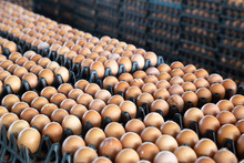 Egg Panels Arranged On A Chicken Farm With A Blurred Egg Background, Occupation Of Farmers In Thailand