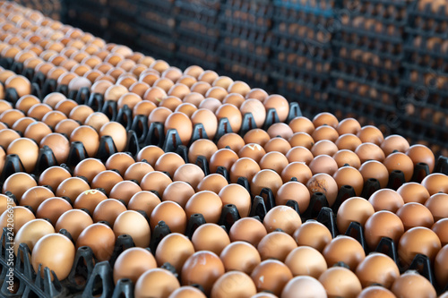 Fototapeta Egg panels arranged on a chicken farm with a blurred egg background, Occupation