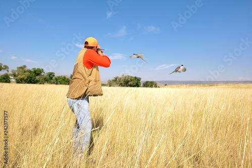 Bird Hunting Wallpaper Mural