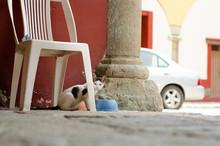 Un Gato De La Calle Comiendo De Un Bowl Bajo Una Silla De Plastico