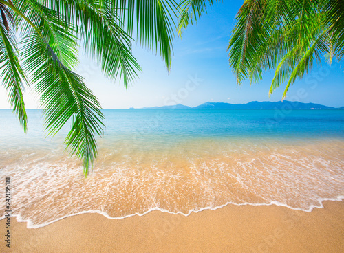 Foto auf Leinwand Palms tropical beach with coconut palm