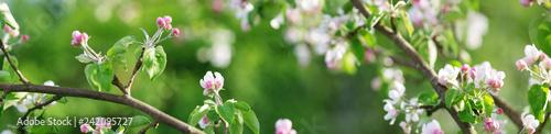 Fototapeta premium niewyraźne tło jabłoń