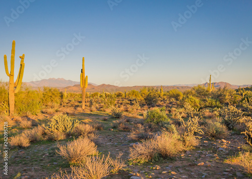 Poster de jardin Desert de sable The Saguaro cactus is a true symbol of the American west and its desert landscape. These stunning images shot in Arizona's vast wilderness reveal beautiful mountains as a backdrop to these nature pics