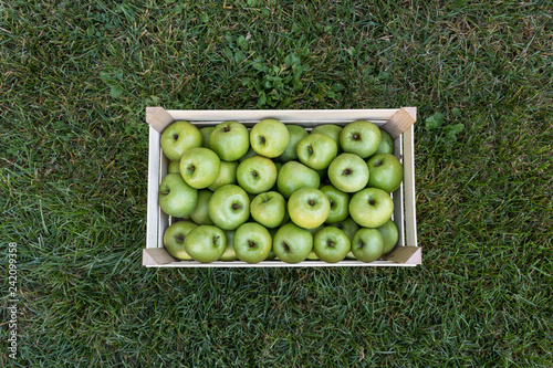 Photographie Close up of a crate with fresh apples on grass: Granny Smith