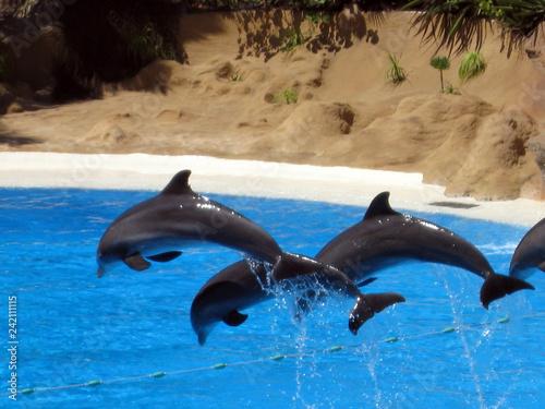 Foto op Plexiglas Dolfijnen dolphin in water