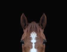 Close-up Of Top Of Horses Head Against Black Background