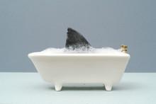 Shark Fin In Bath In A Grey Setting