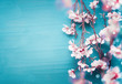 Leinwandbild Motiv Pretty spring cherry blossom branches on turquoise blue background with copy space for your design. Springtime holidays and nature concept