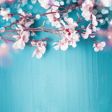 Beautiful Spring Cherry Blossom Branches On Turquoise Blue Background With Copy Space For Your Design. Springtime Holidays And Nature Concept
