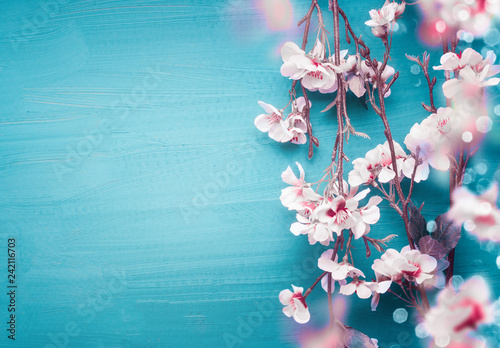 Fototapeta Pretty spring cherry blossom branches on turquoise blue background with copy space for your design. Springtime holidays and nature concept